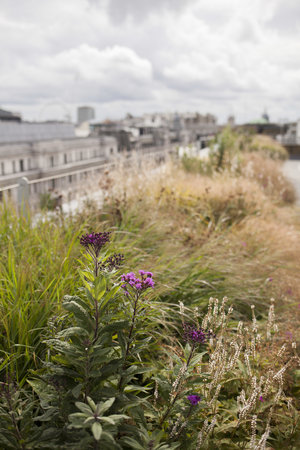 180930 Greening London Crown Estate Rooftop Garden