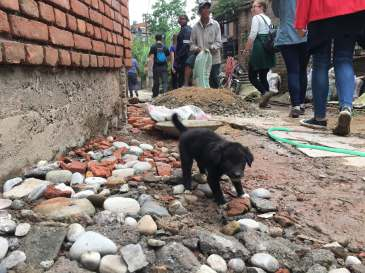 181021 Voluntourism Nepal doggo